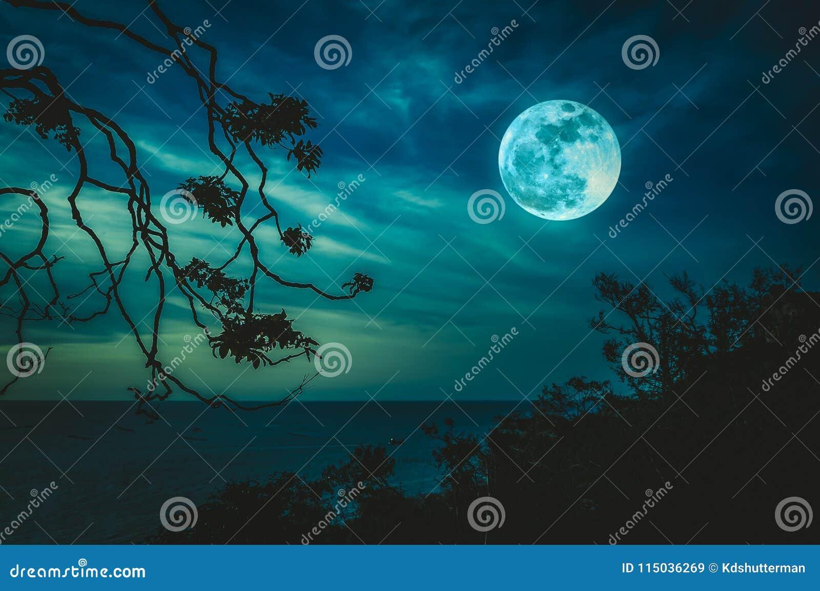 Profili I Rami Degli Alberi Sul Cielo E Sulla Luna Piena Sopra Il
