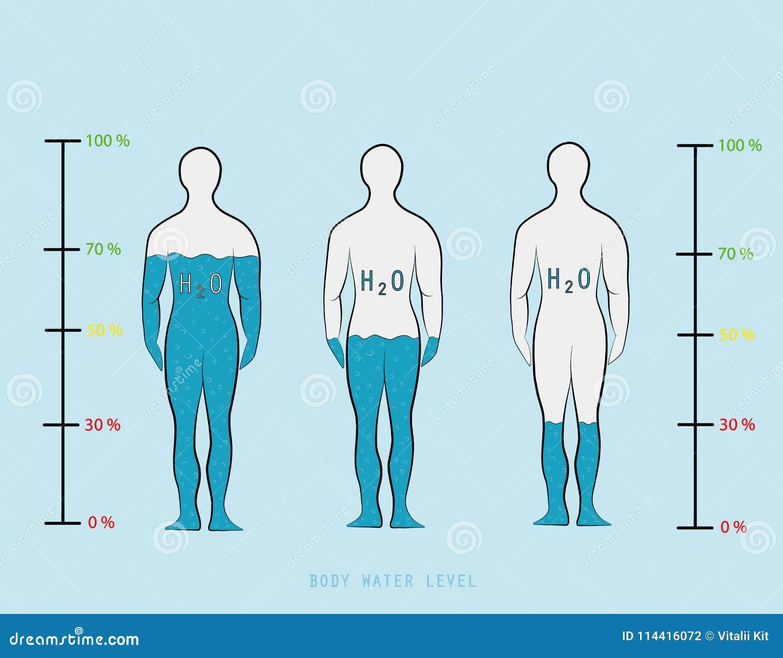 Profili Il Livello Di Mostra Infographic Di Percentuale Dell Acqua