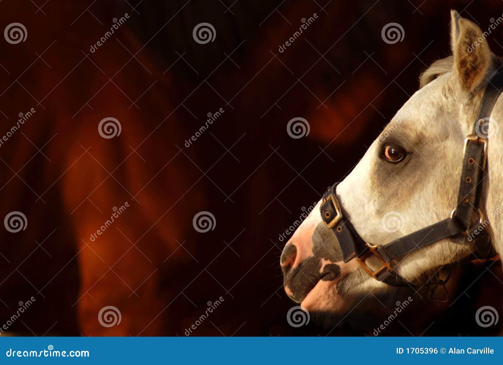 Profilo del cavallo