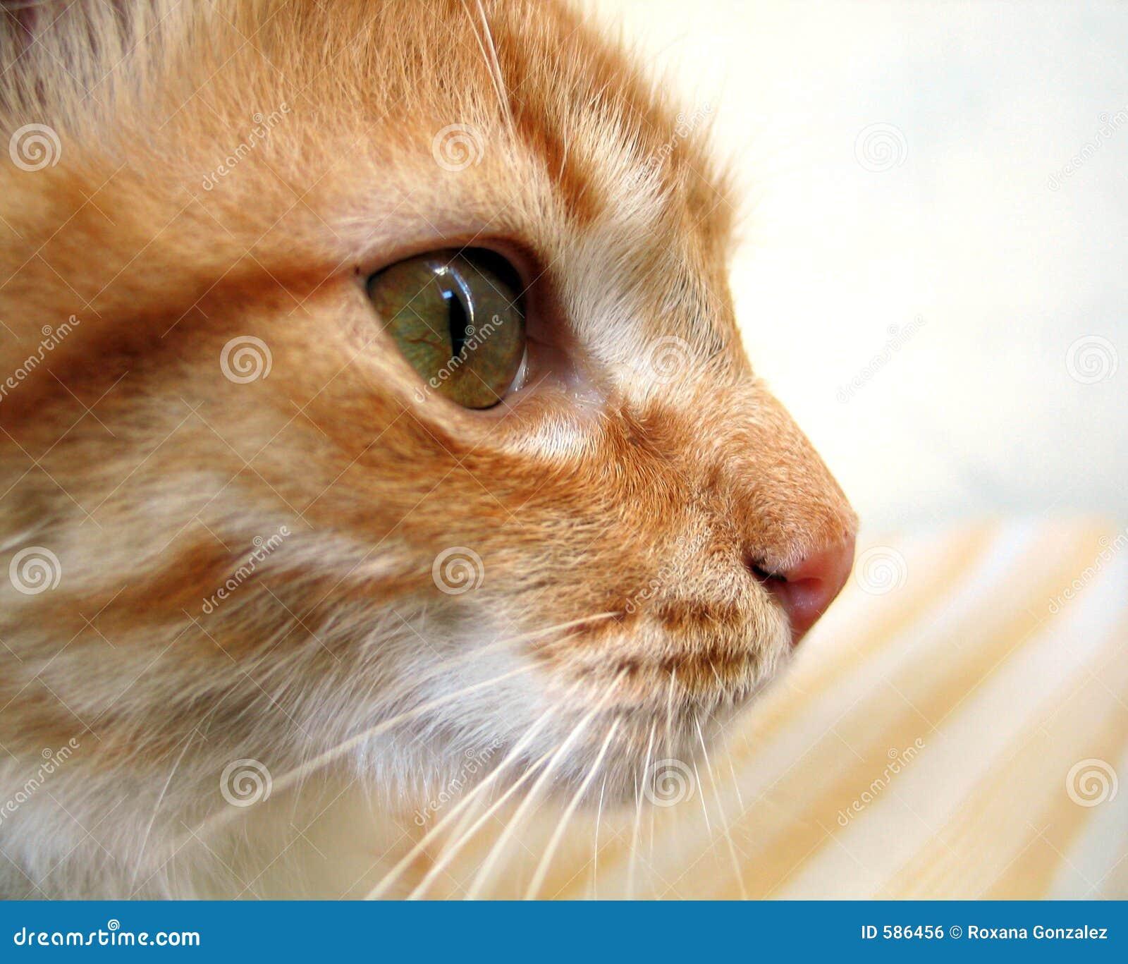 Profilo del gatto fotografia stock immagine di verde - Immagine del gatto a colori ...