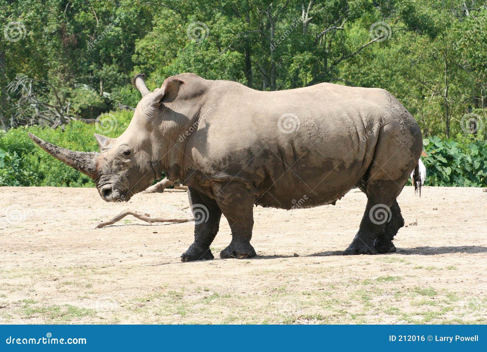 Profilo di rinoceronte