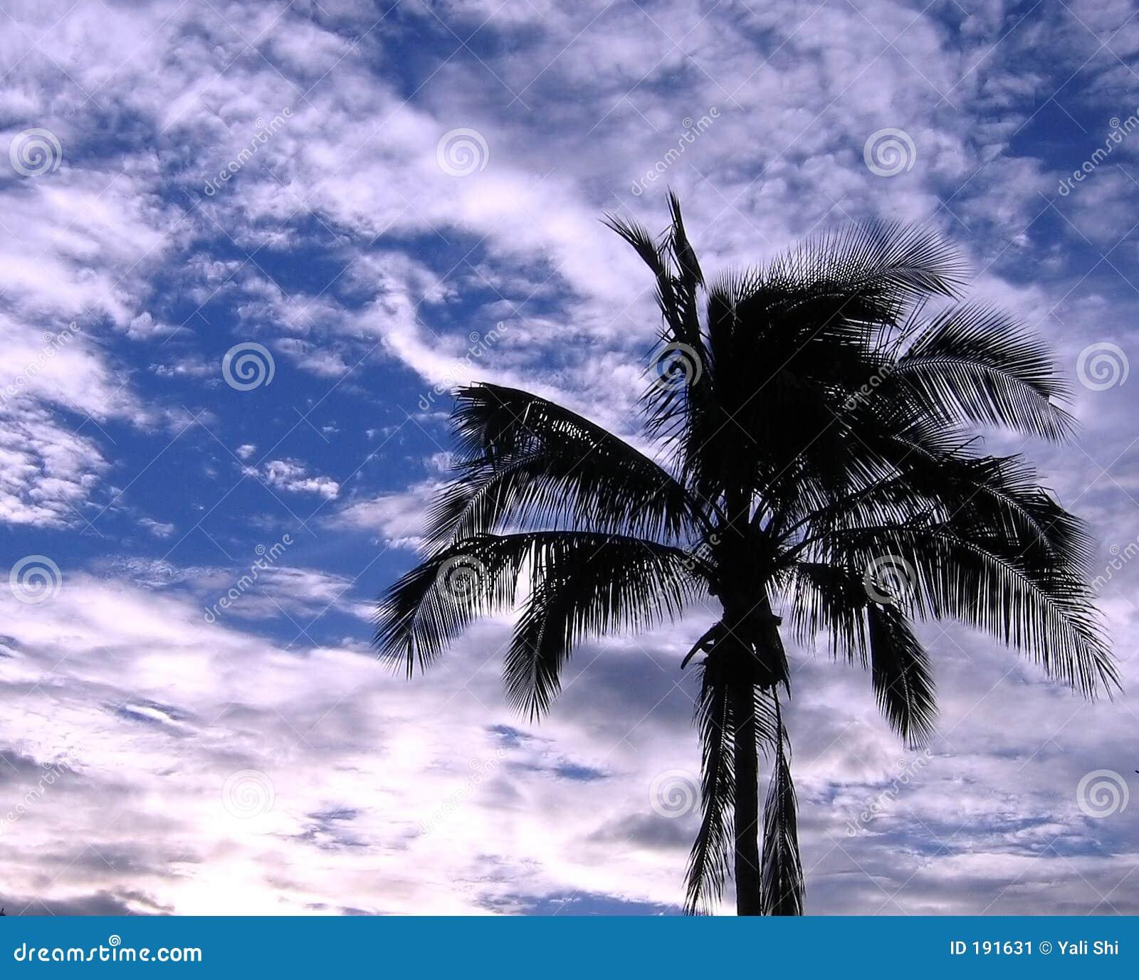 Profilo di una palma