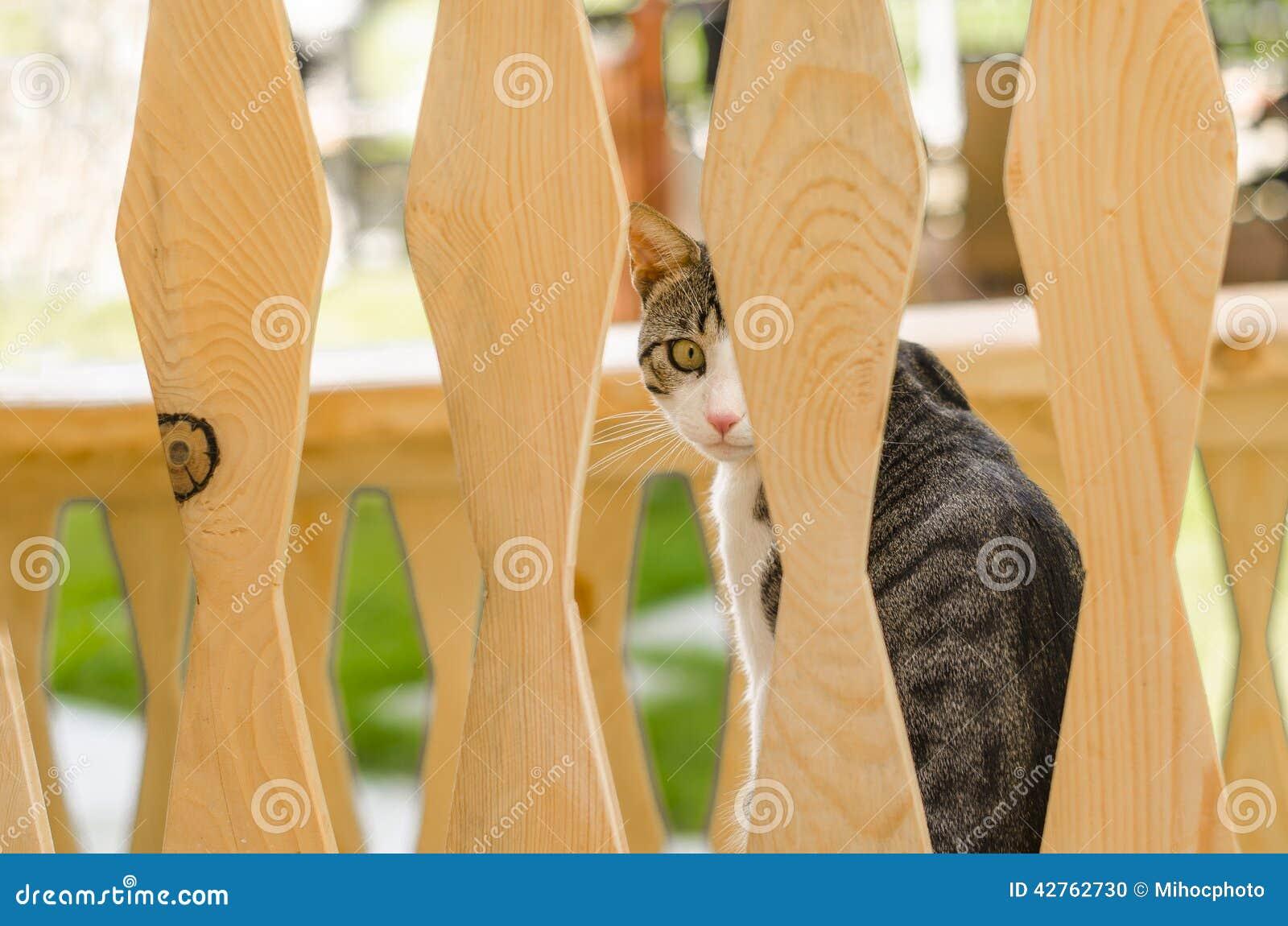 Profilo laterale del gatto
