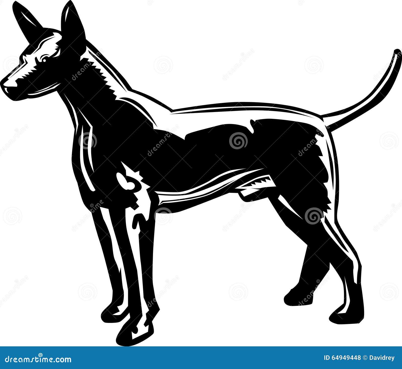 Profilowy Xoloitzcuintle Meksykański bezwłosy