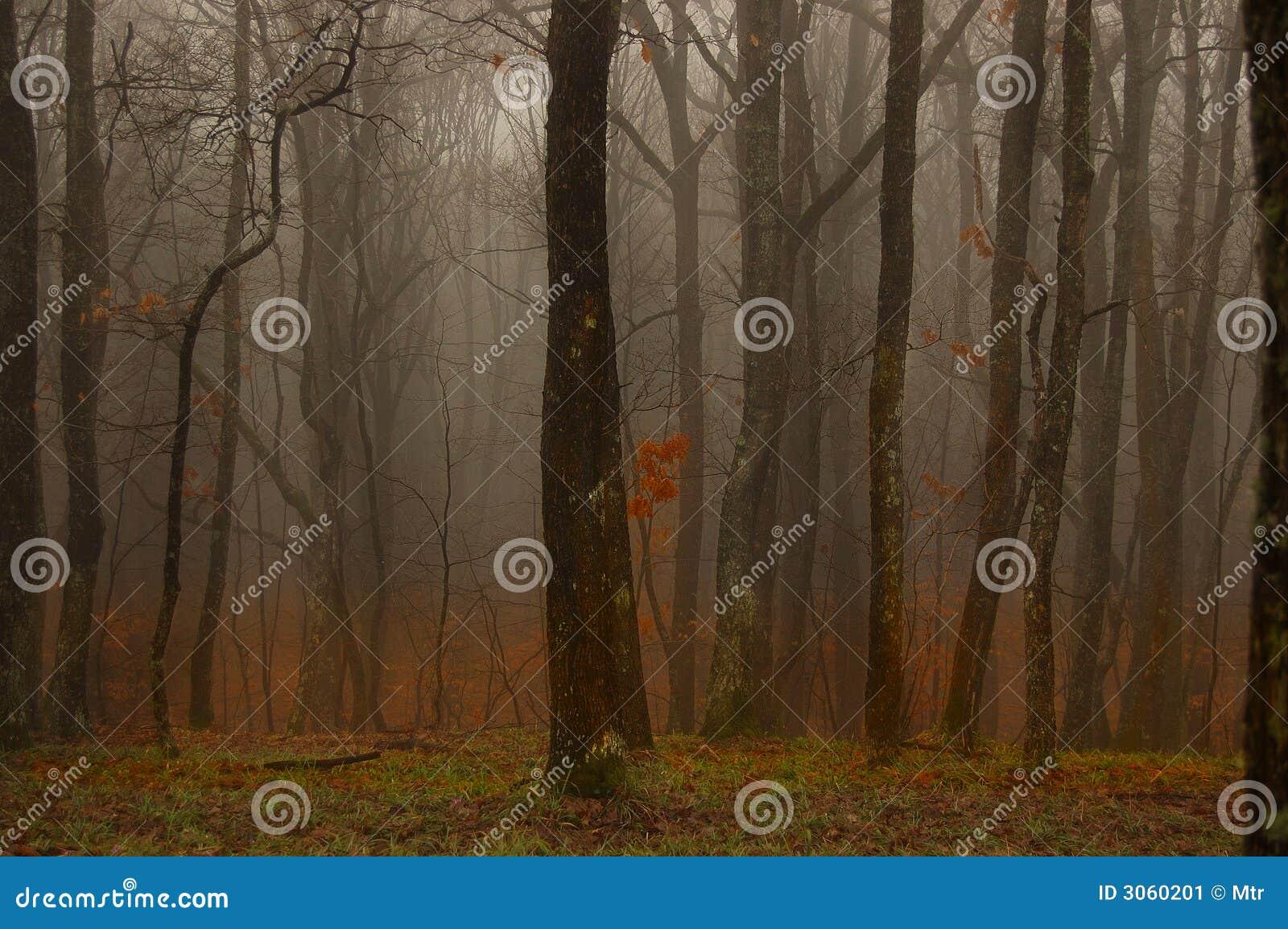 Profundamente na floresta