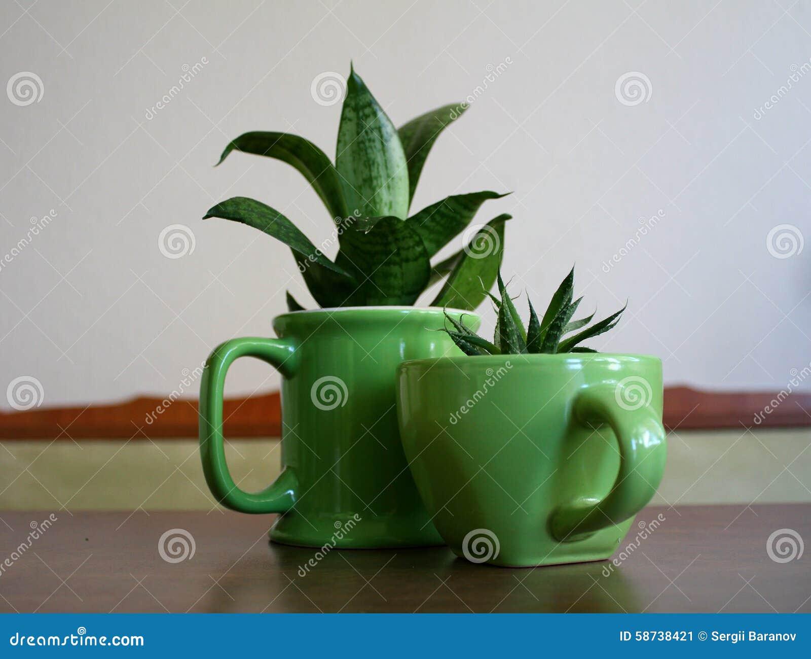 Vasi originali vasi per piante aromatiche vasi terracotta for Decorazione vasi