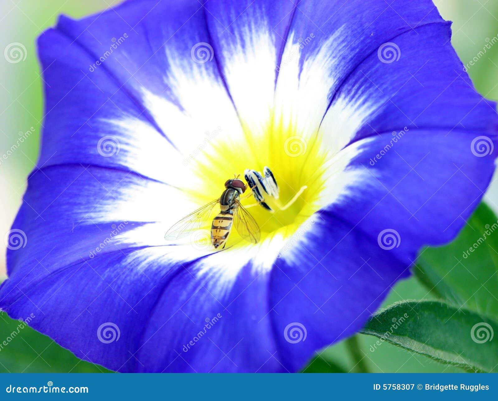 Projecteur sur l abeille