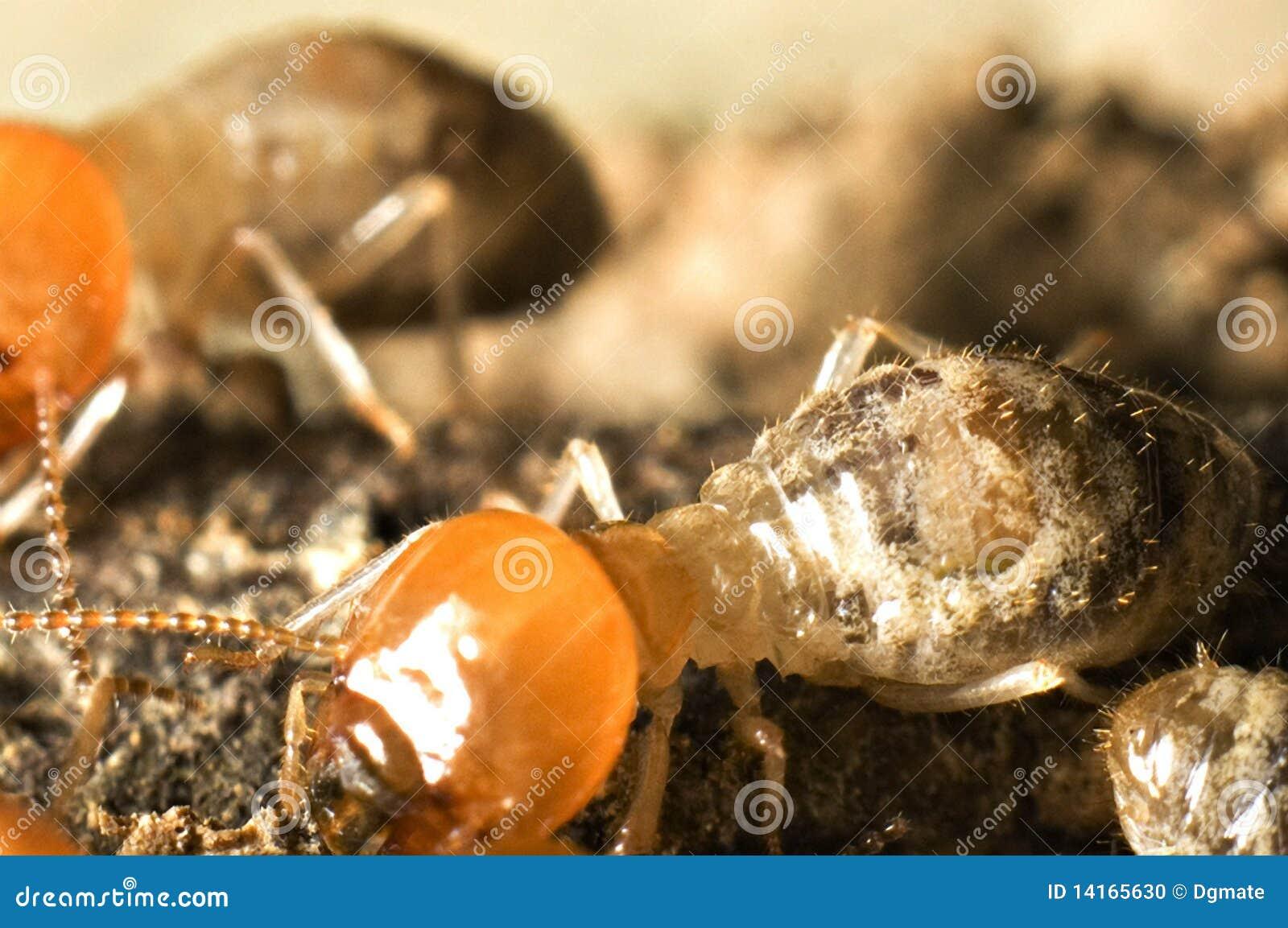 Projectile d instruction-macro de termite
