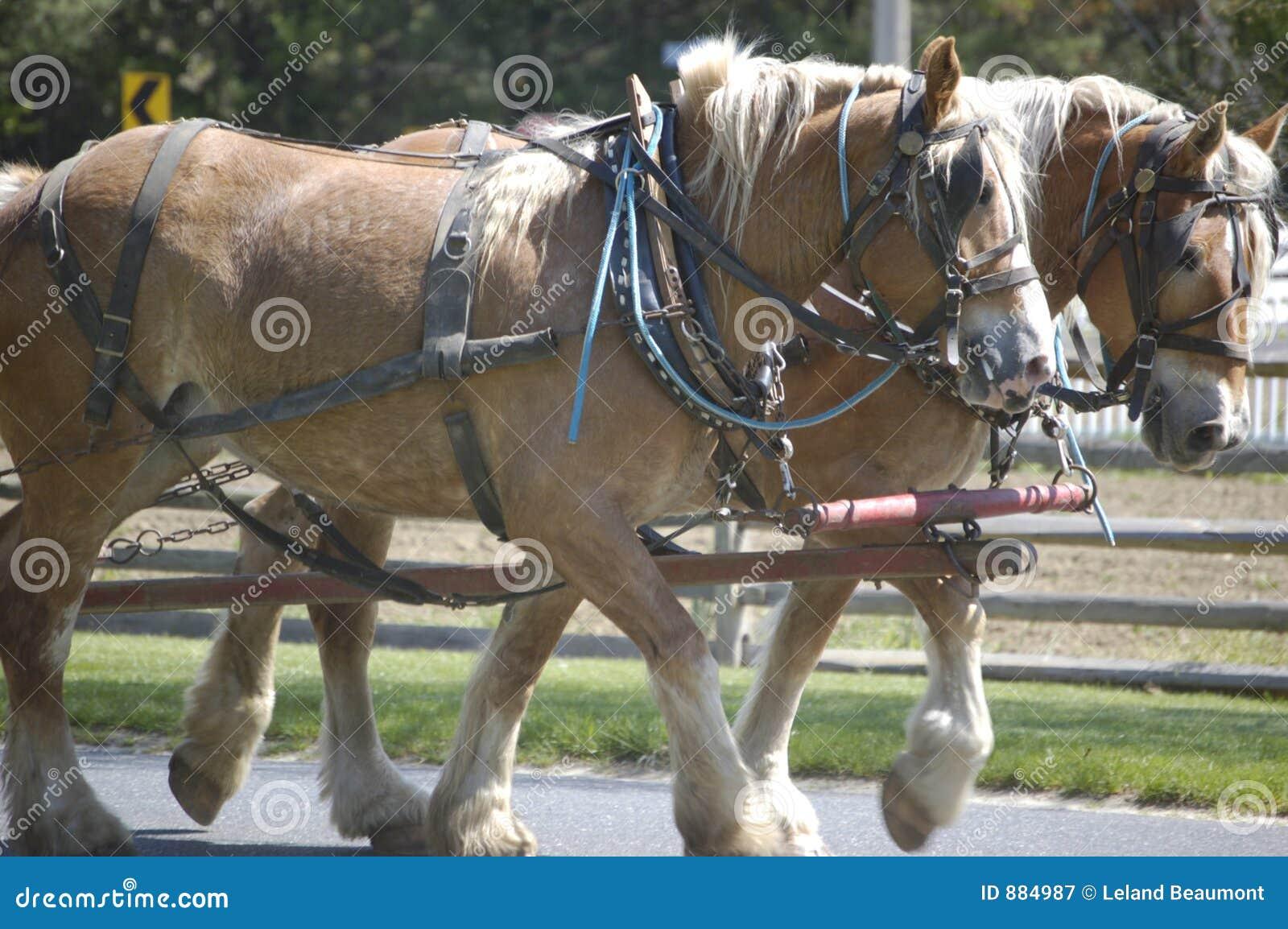 Projekty konie ii