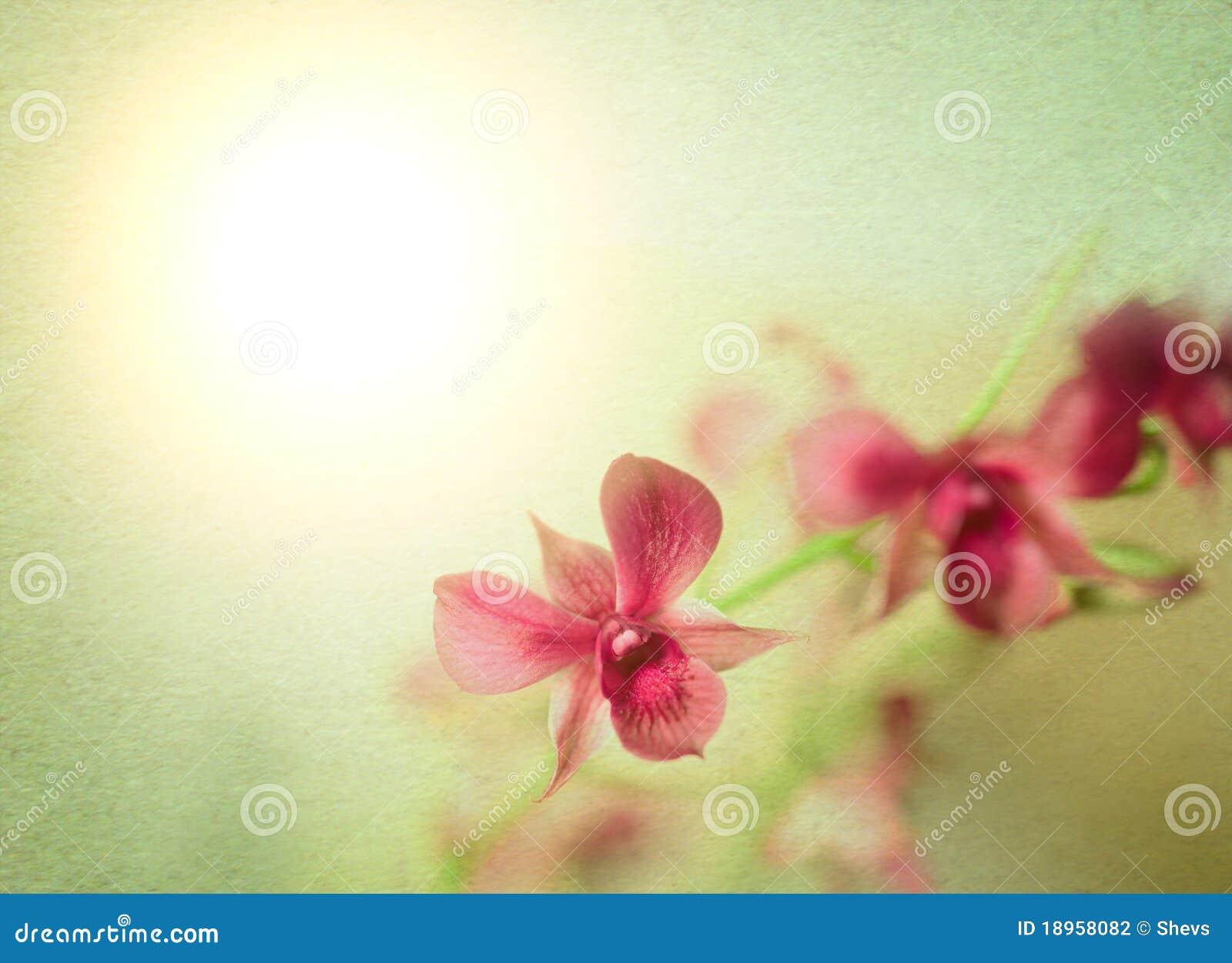 Projeto estilizado da orquídea