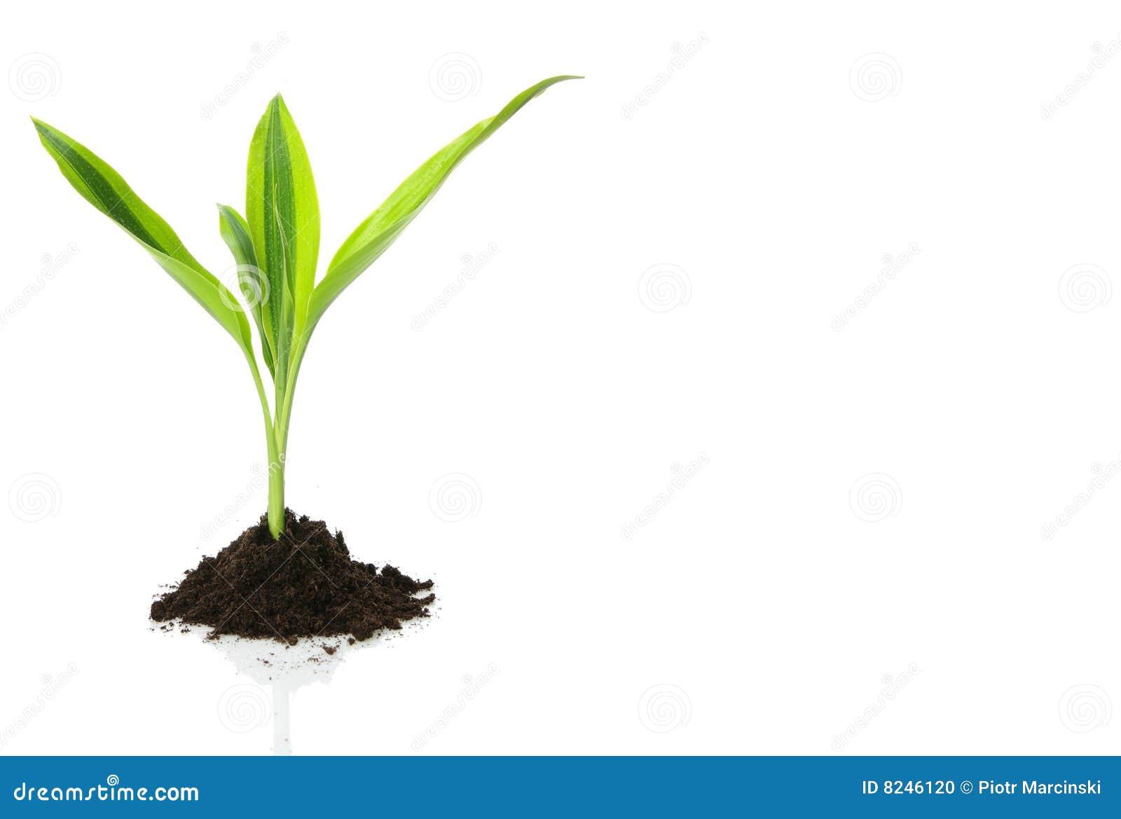 Projeto novo da vida (conceito do crescimento)