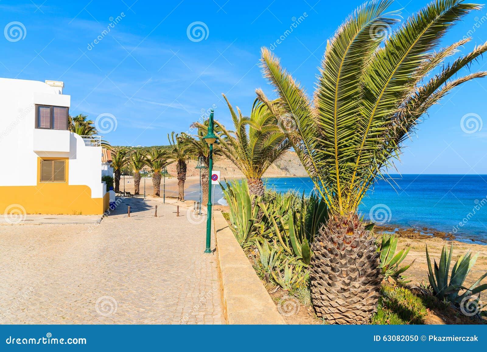 Download Promenade Côtière Avec Des Palmiers Photo stock - Image du paume, océan: 63082050