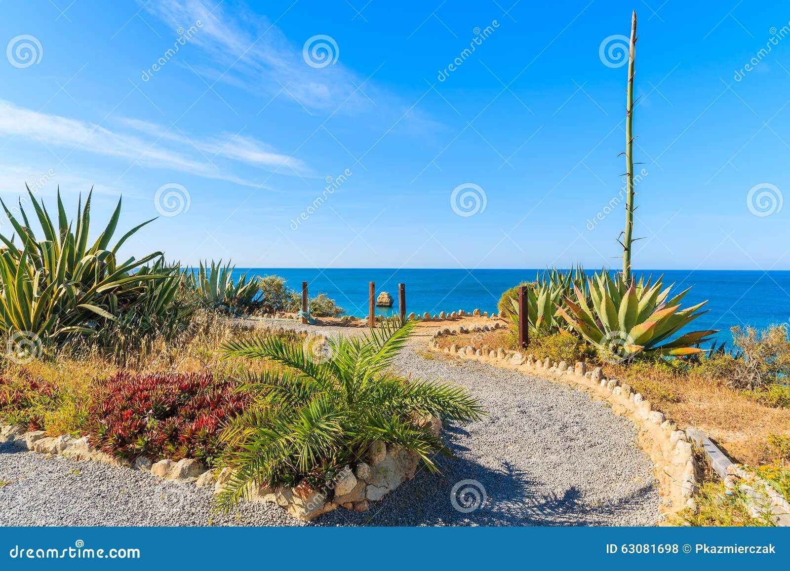 Download Promenade Côtière Avec Des Plantes Tropicales Photo stock - Image du paisible, destination: 63081698