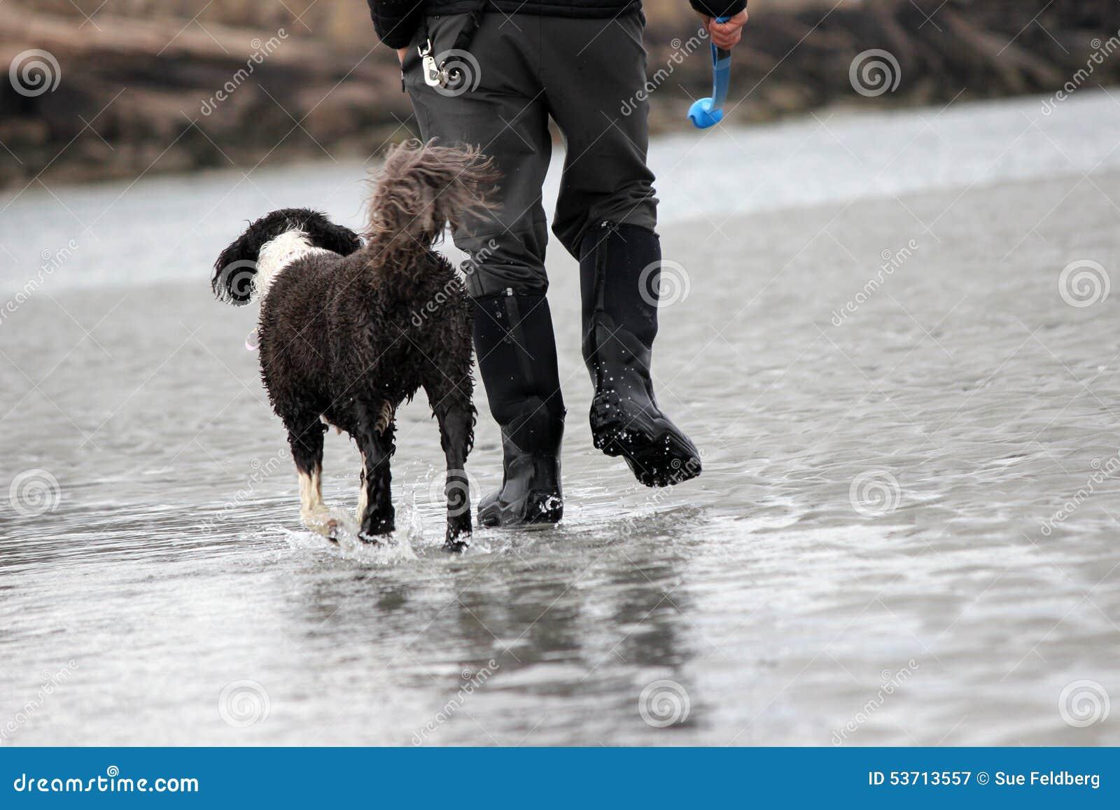 Promenade de chien d hiver sur la plage