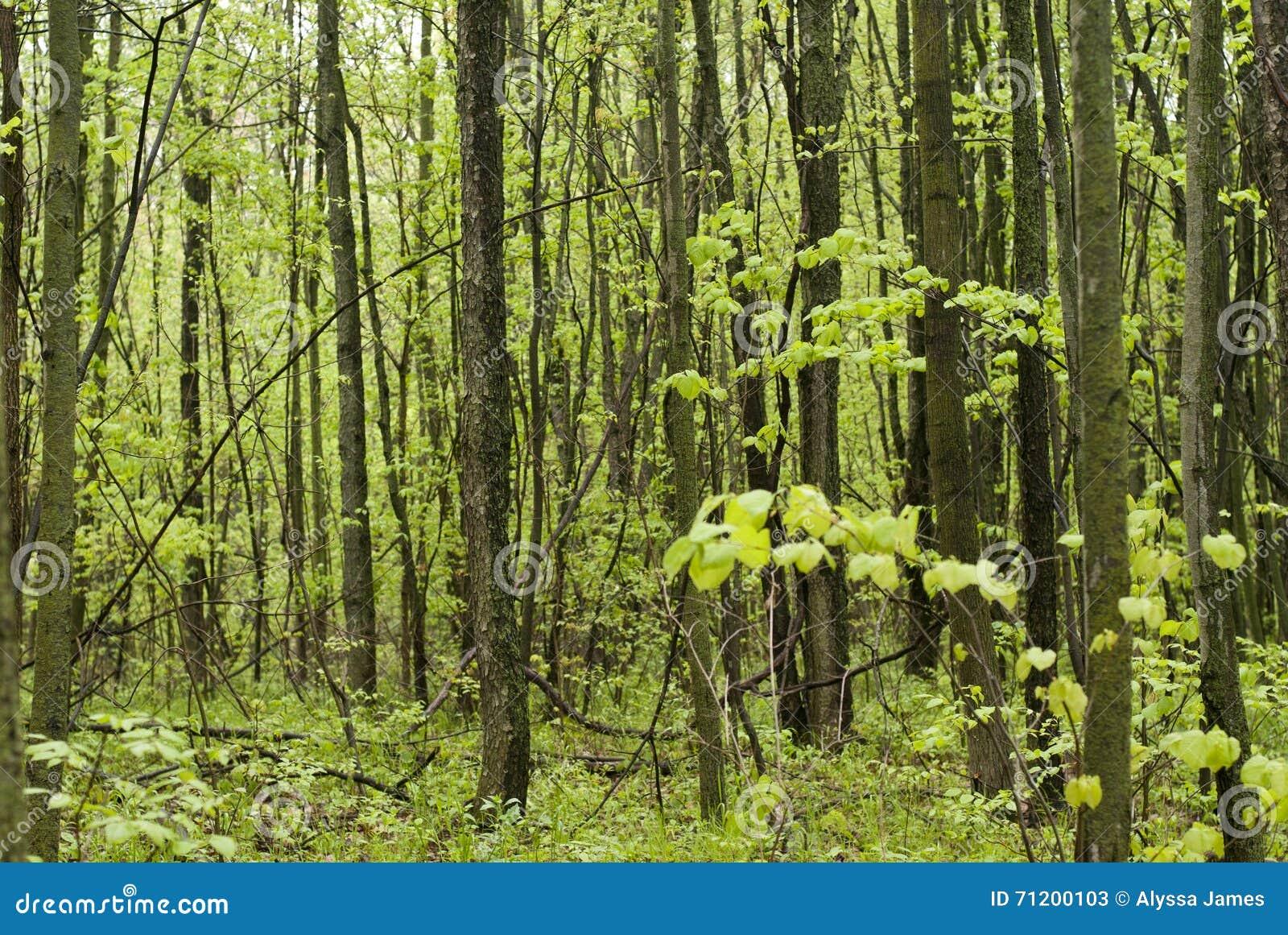 Promenade par les bois