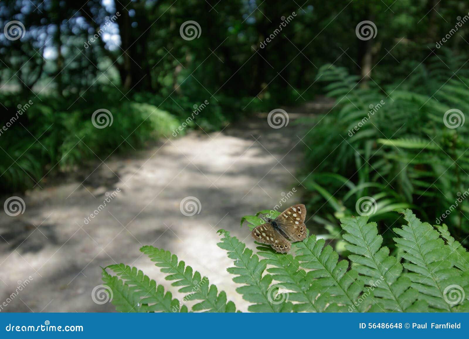 Promenades de région boisée