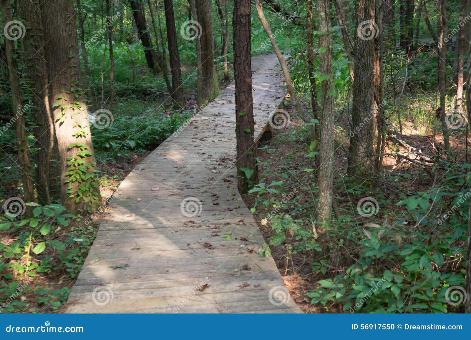 Promenadeweg door het Hout