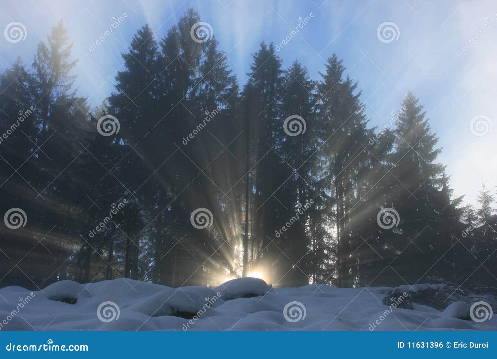 Promienia forrest światło słoneczne