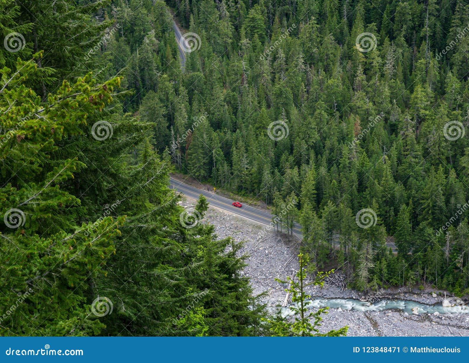 Propósito aéreo de la conducción de automóviles roja solitaria a través de un bosque del pino en el soporte Rainier National Park