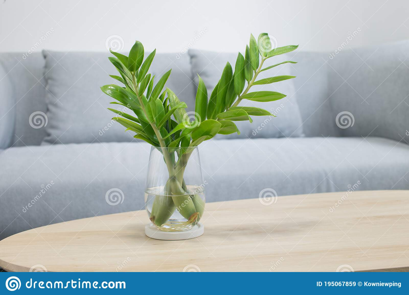 Zz Plant Photos Free Royalty Free Stock Photos From Dreamstime