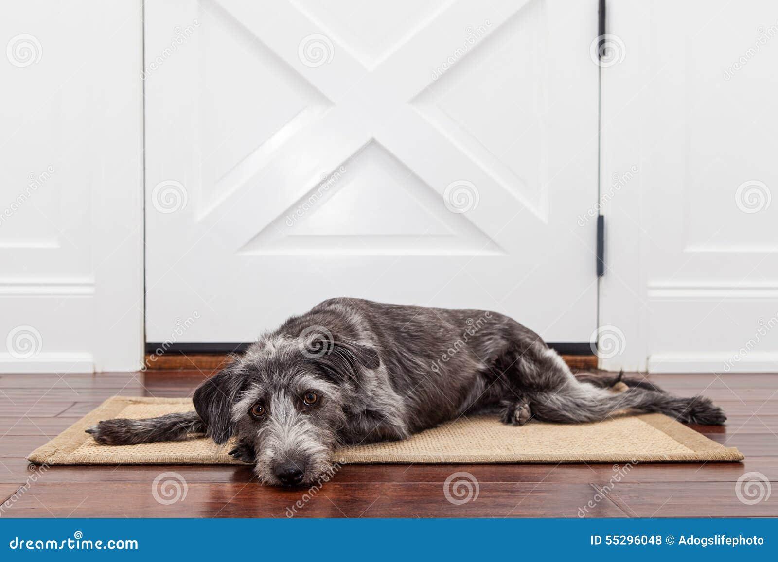 Proprietario aspettante del cane triste