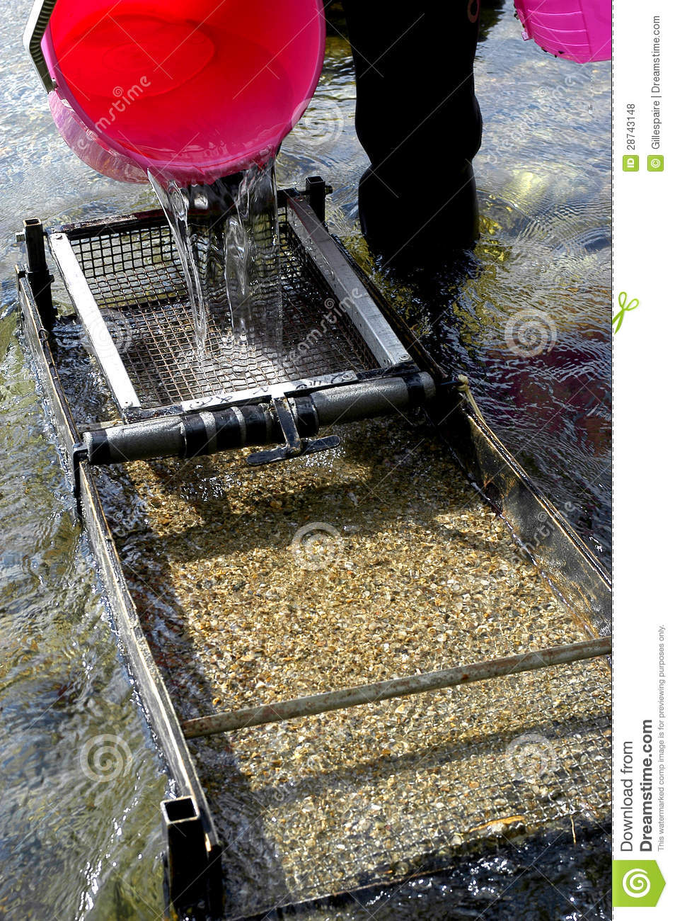 Prospector Panning For Gold In River Royalty Free Stock