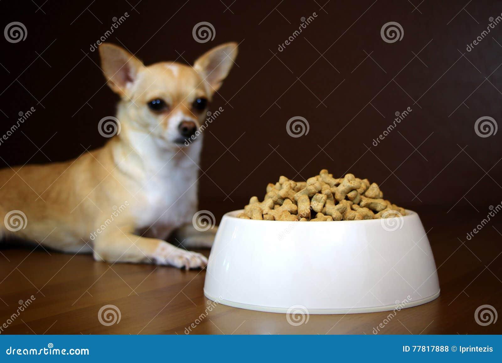 Prospettiva del cane di una ciotola dell alimento