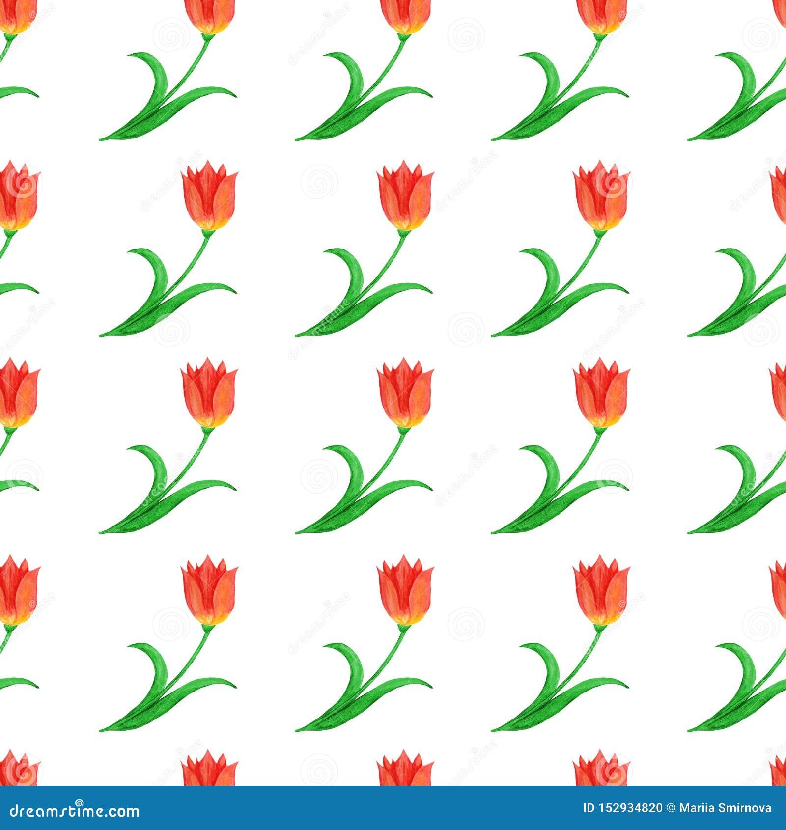 Prosty bezszwowy wzór tulipany odizolowywający na białym tle abstrakcyjny kwiecisty wz?r