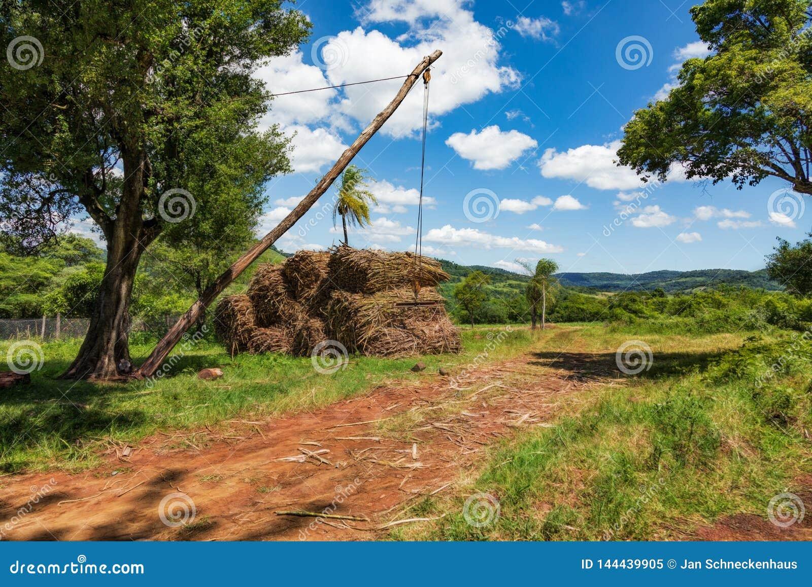 Prosty dźwigowy przyrząd dla ładować trzcinę cukrową na ciężarówkach w Paraguay