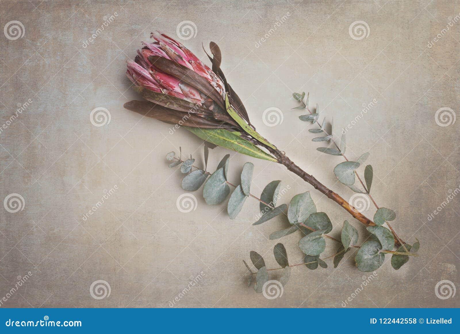 Protea, fiore, arte della parete, fynbos, Sudafrica, piante
