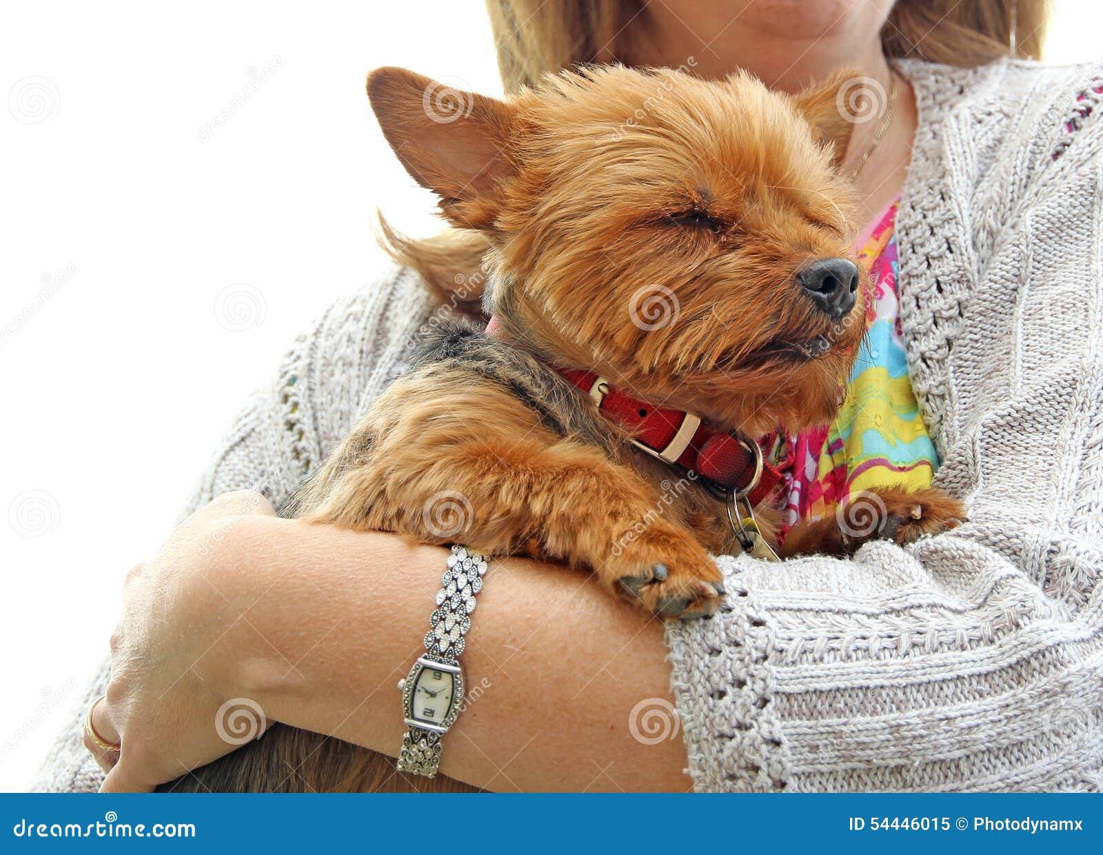 Protección del perrito