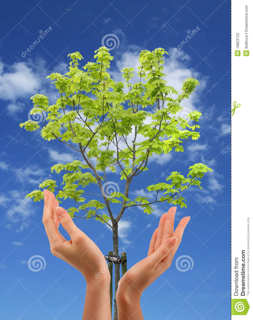 protect the nature essay Esė it is important for everybody to protect nature our planet is facing many problems such as air pollution, hole in the ozone layer, water shortages or even global warming.