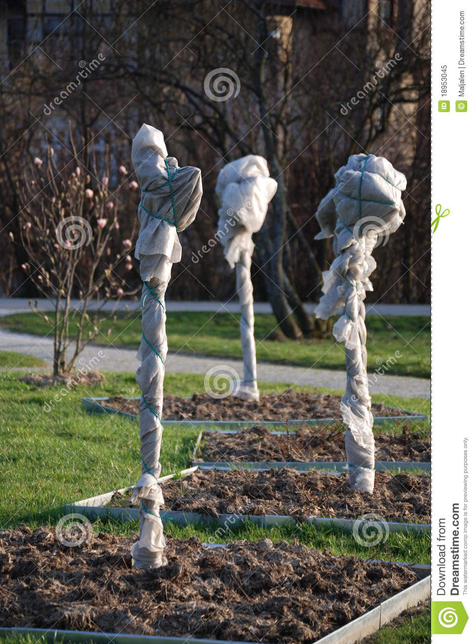 Protected Trees In Winter Stock Image Image Of Young 18953045