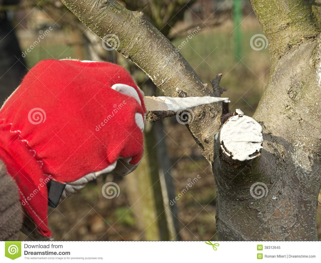 Protection de ressort d 39 arbre fruitier image stock image for Arbre fruitier