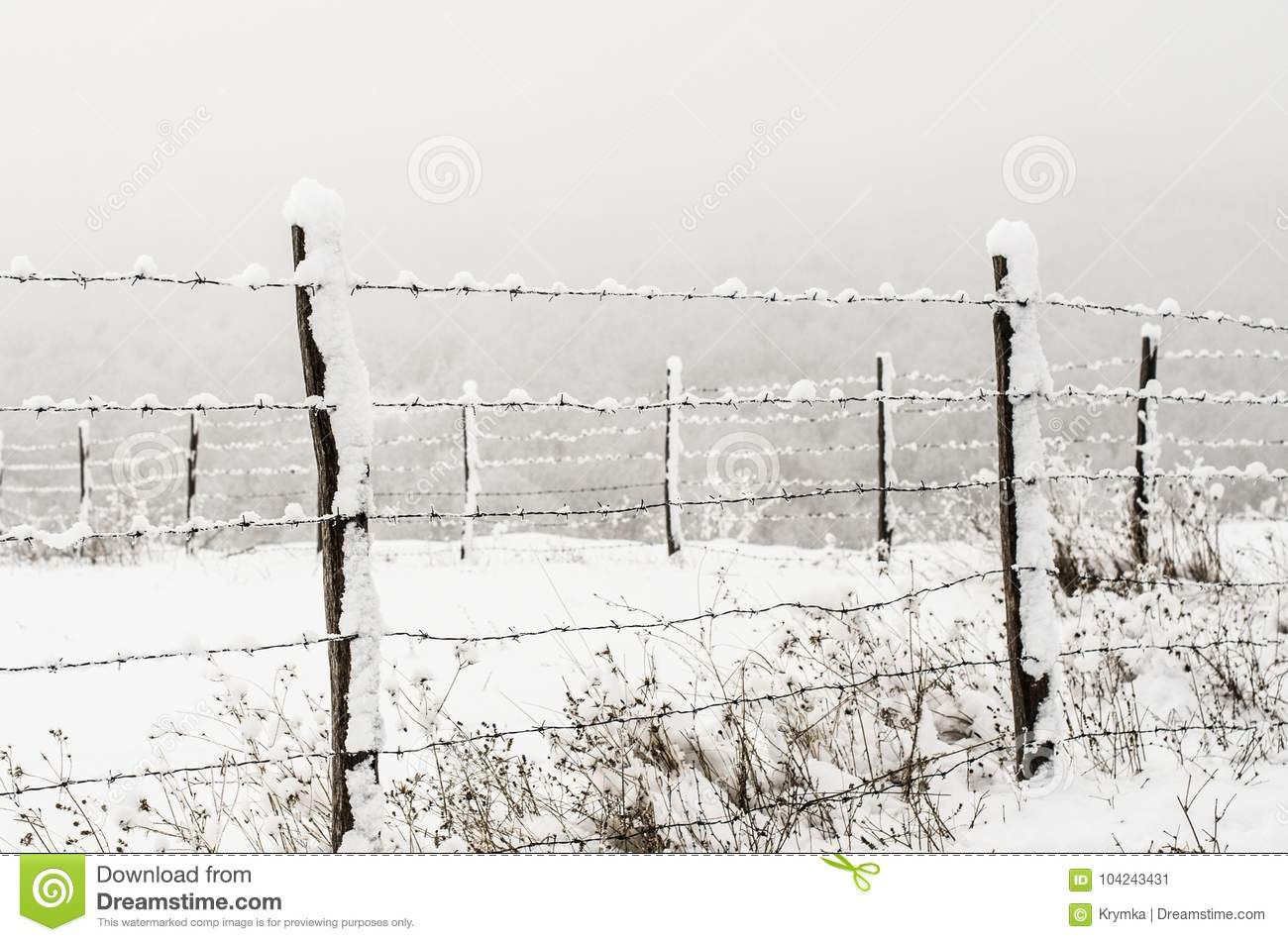 Protective Barbed Wire Fence Stock Image - Image of travel, wire ...