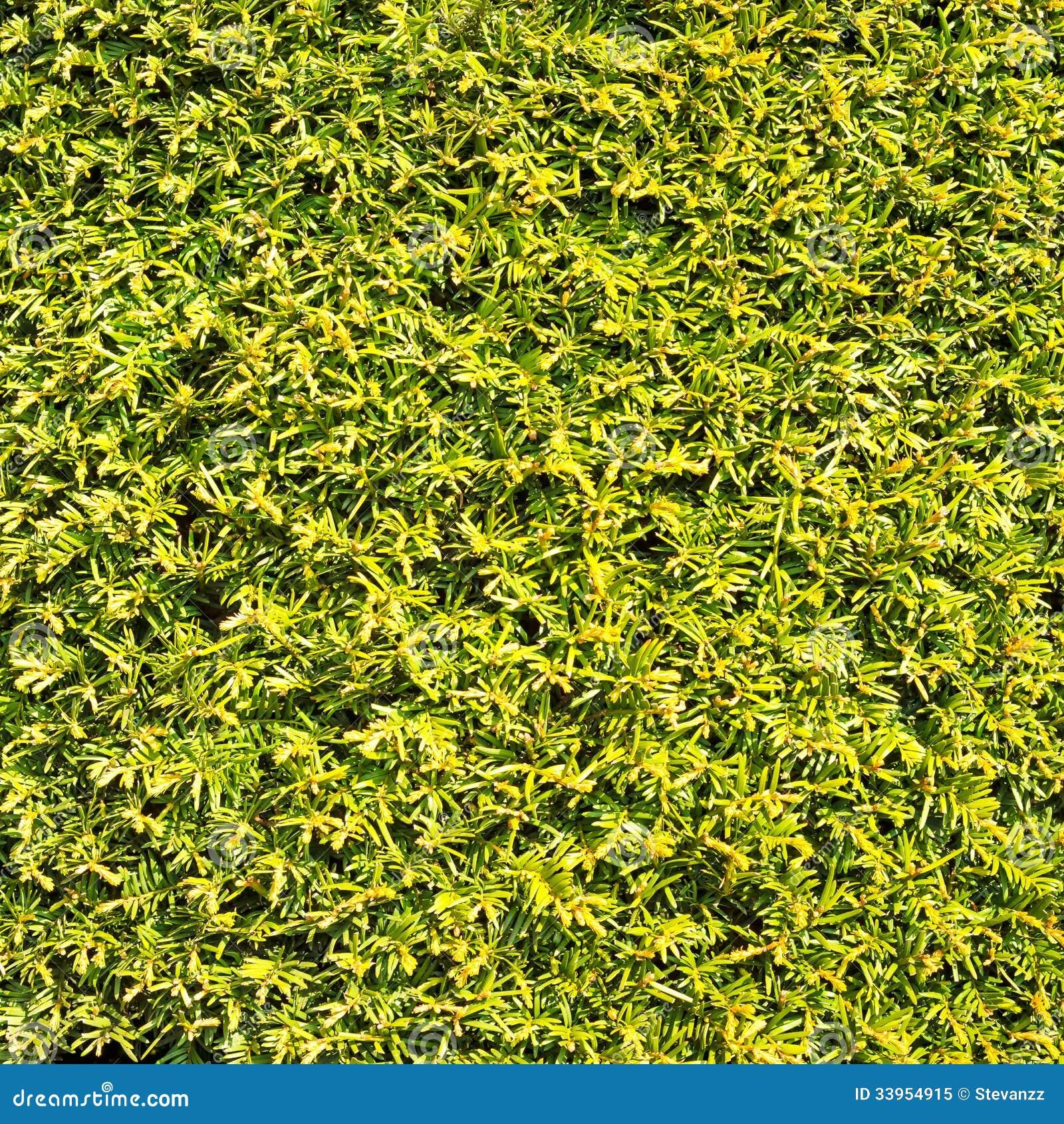 Proteja a parede similar do fundo da textura da grama das folhas verdes