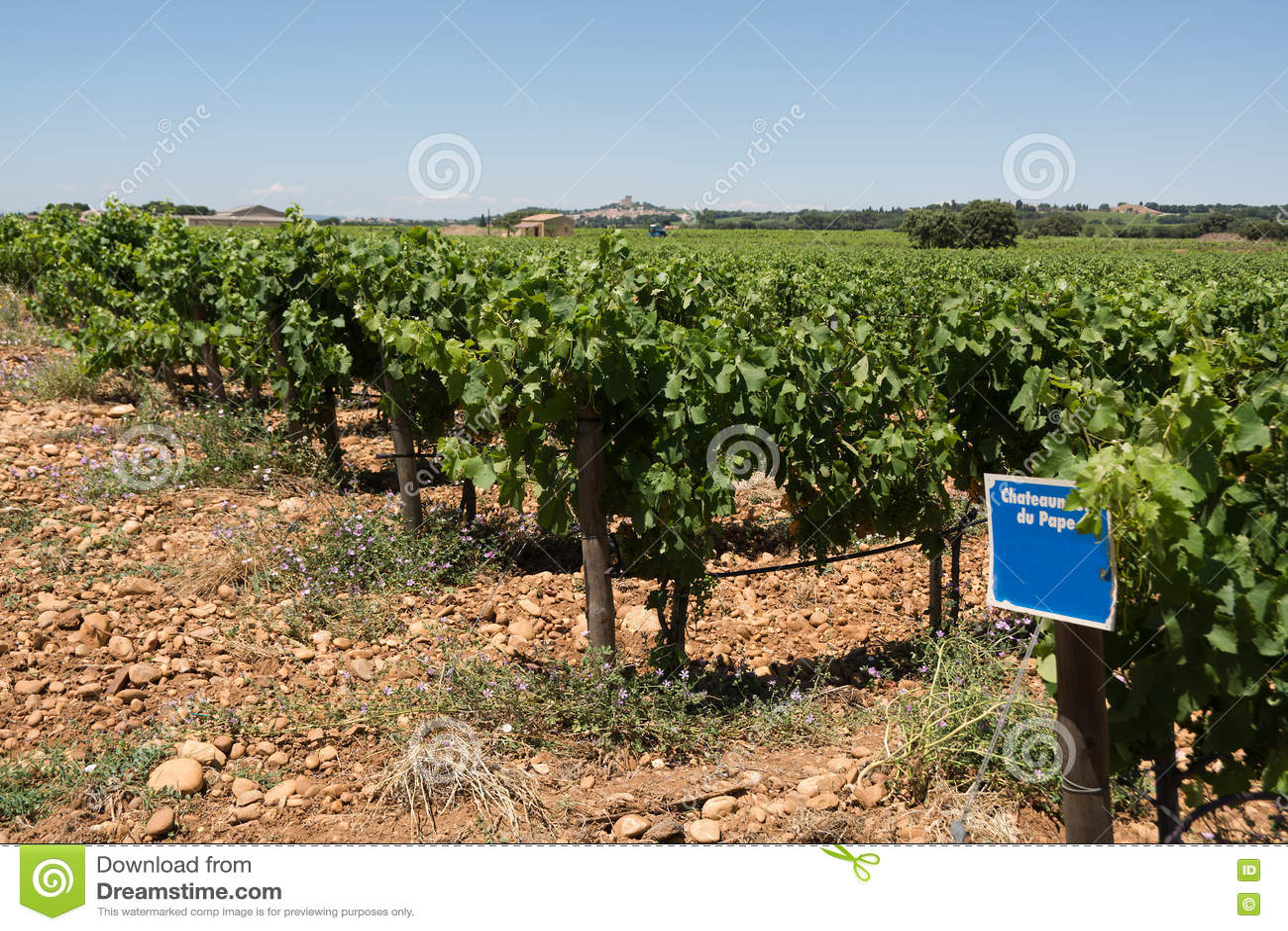 Provencal vineyard
