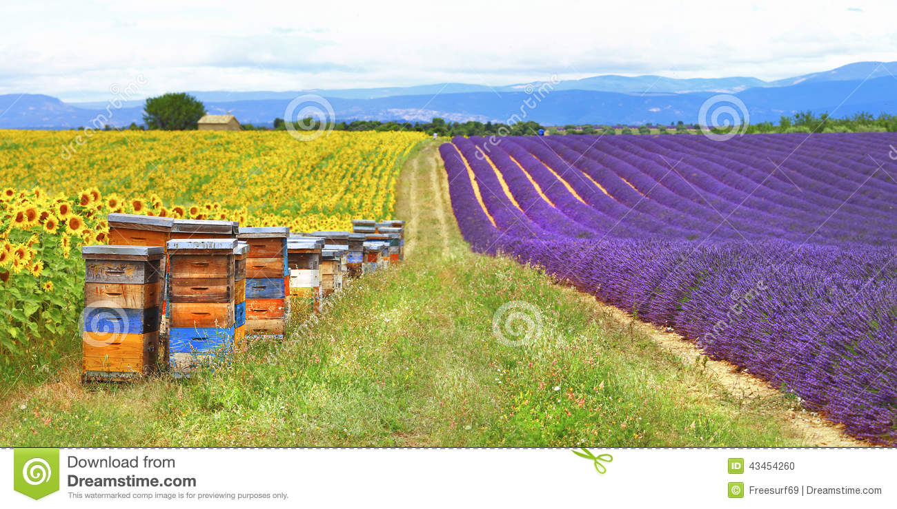 Provence, France , countryside