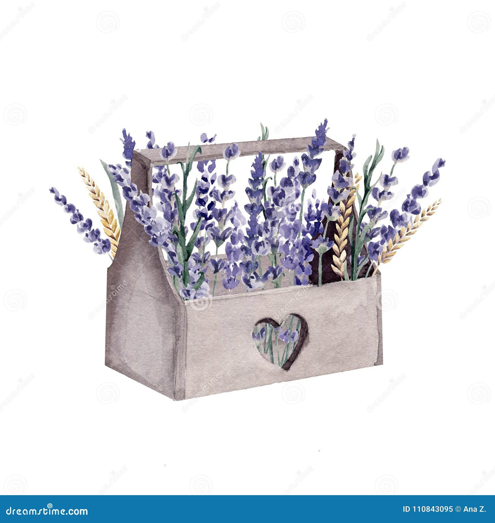 Provence-Kastengetreideweizen des Lavendelaquarells handgemalter