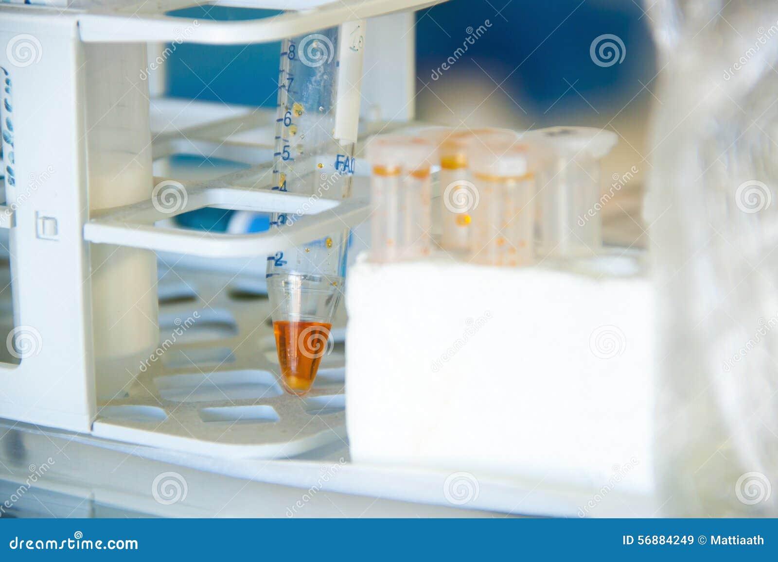 Provetta in un laboratorio