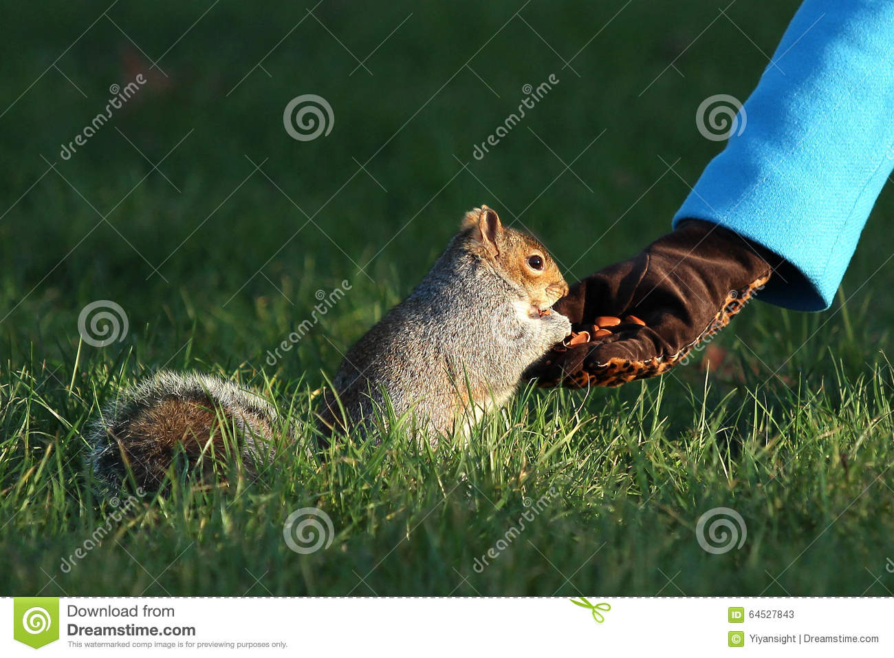 Providing food for the squirrels in winter