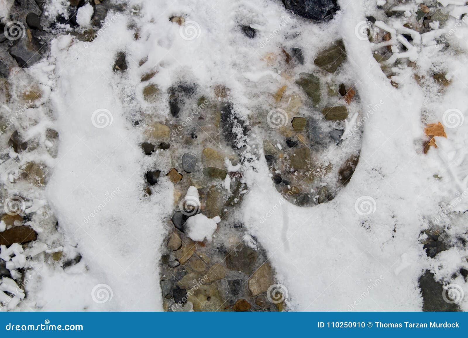Provo, UT/USA-Footprints в снеге вдоль высокогорного следа каньона утеса/Provo, Юты
