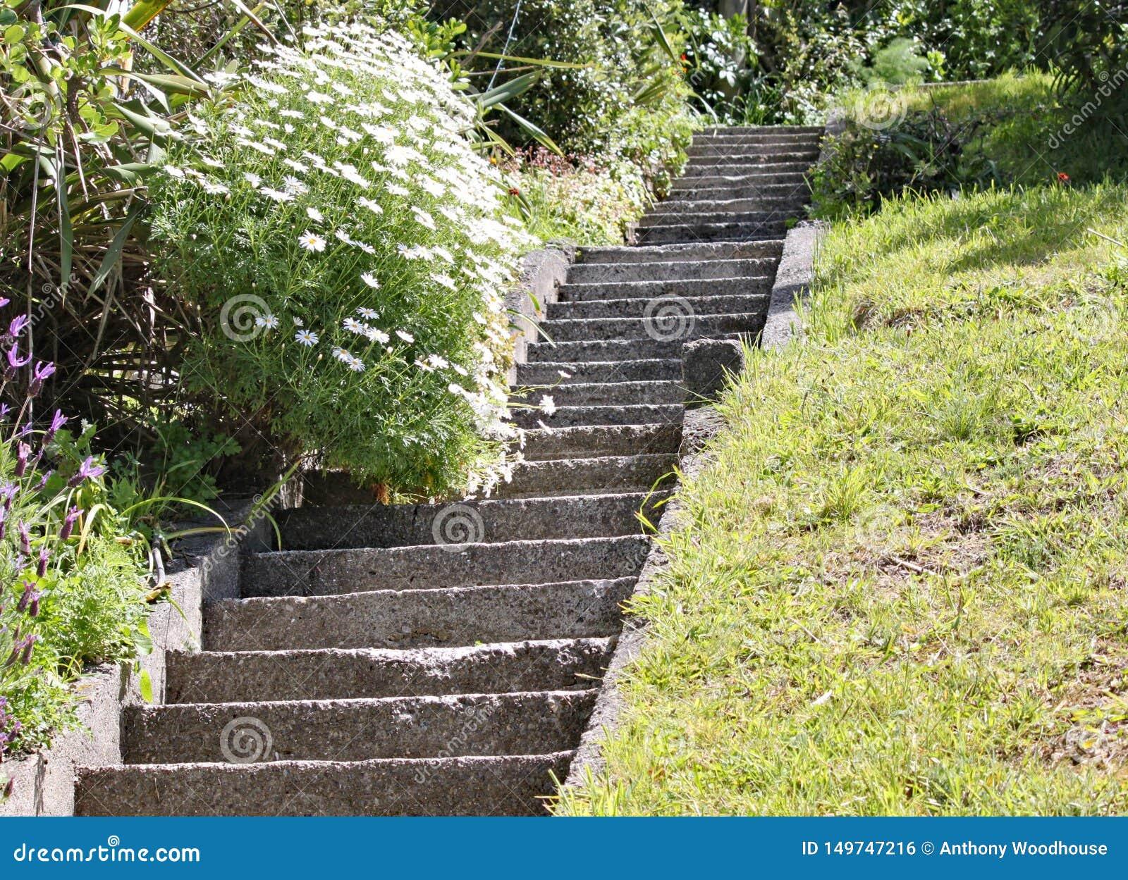 Provvedimenti concreti ripidi in un giardino a Wellington, Nuova Zelanda Uno dei piaceri di vivere alla cima di una collina ripid