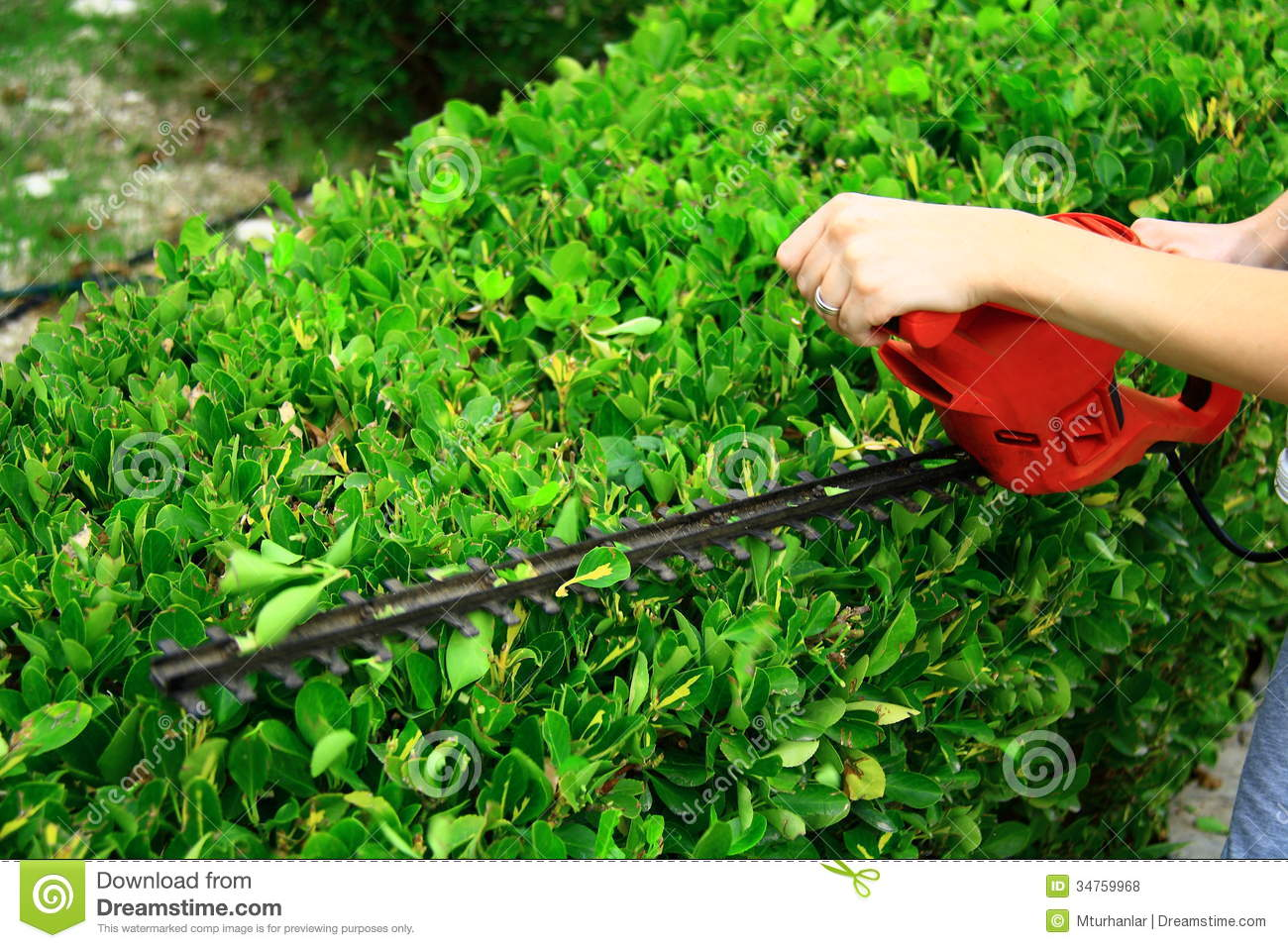 pruning tool on green shrub royalty free stock photos. Black Bedroom Furniture Sets. Home Design Ideas