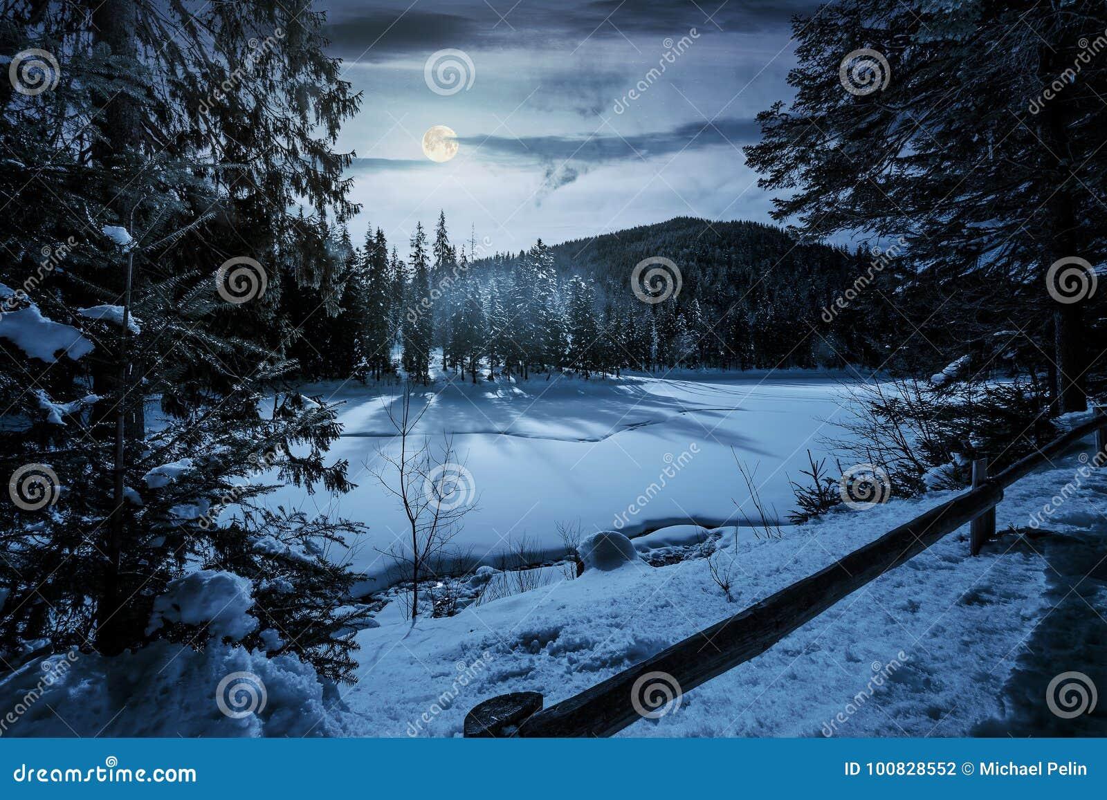 Prydlig skog på ljus för måne för vinternatt oavkortat