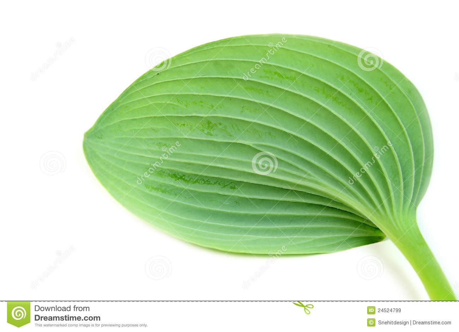 Przeciw tła zieleni liść biel