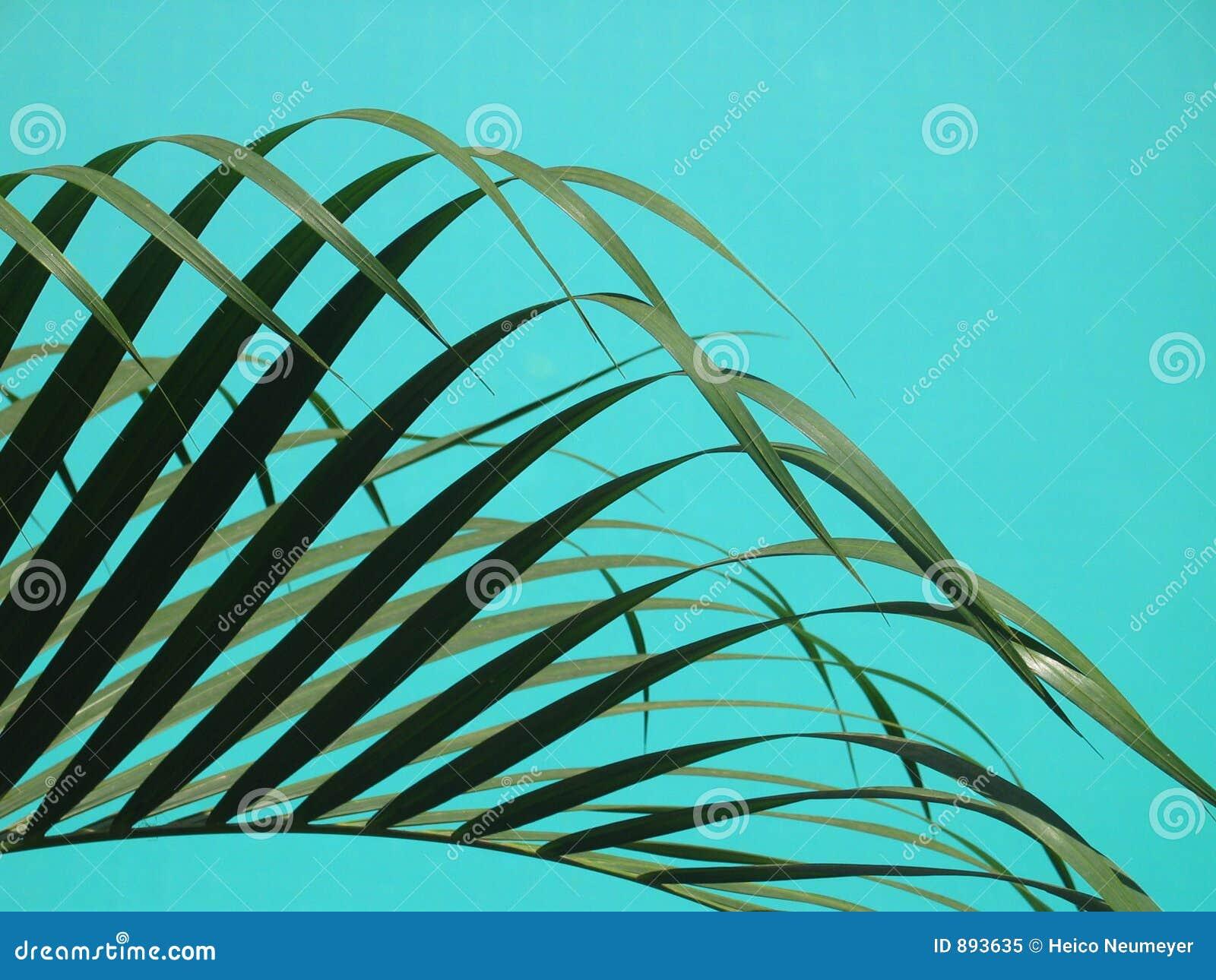Przeciwko eleganckich liści palmowej basen turkusu wodzie