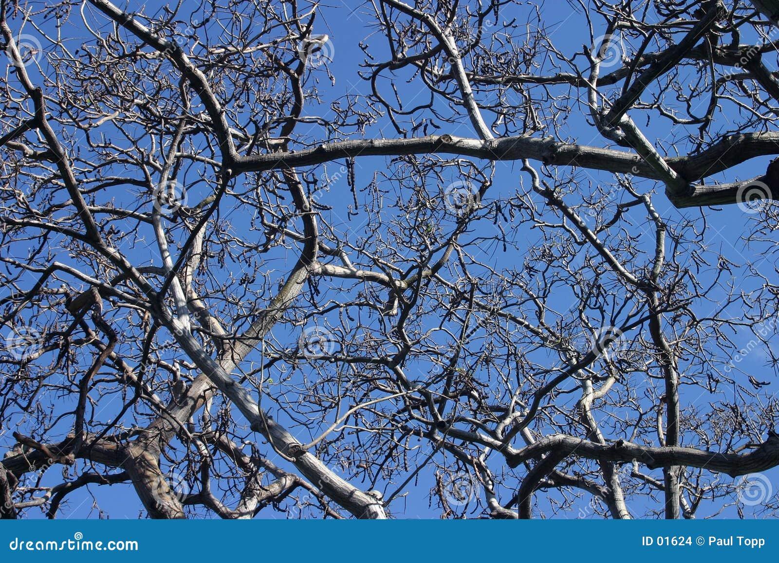 Przeciwko tło niebieskim gałąź tree