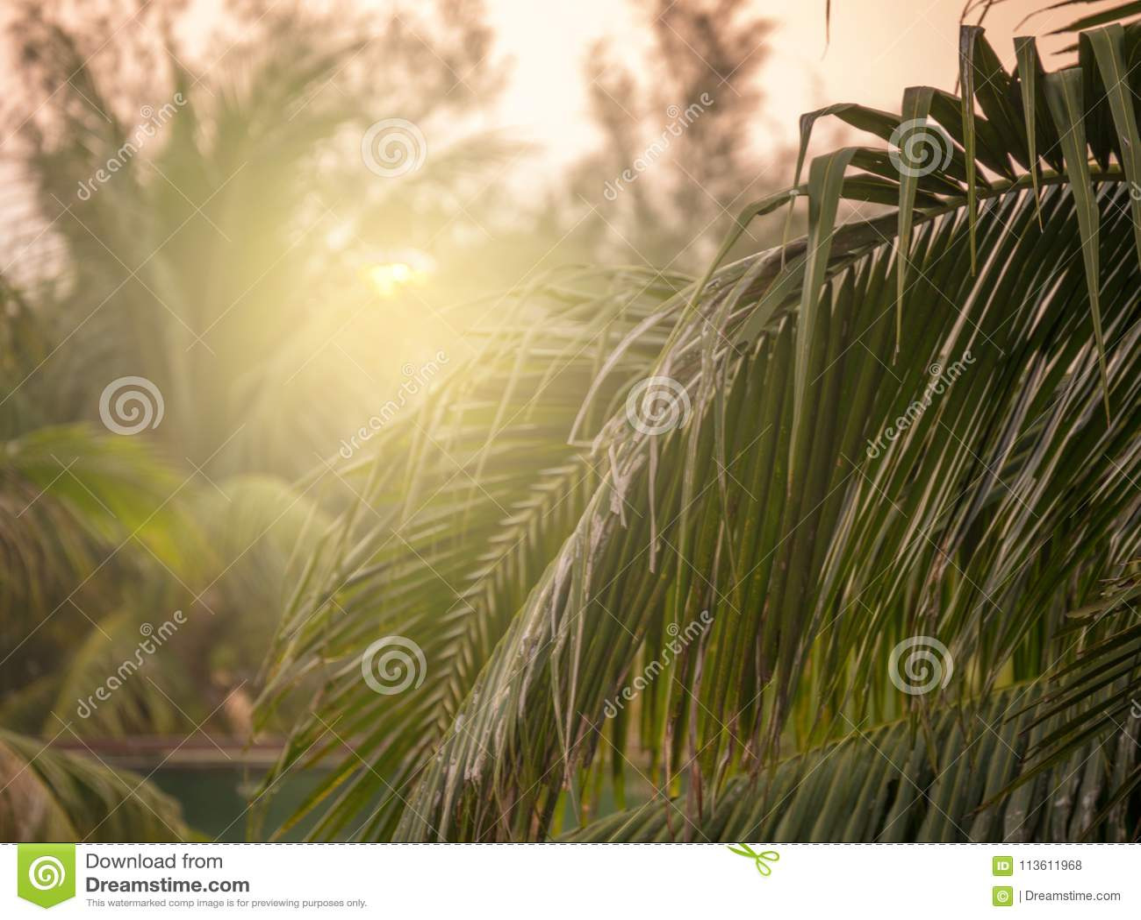 Przed słońcem iść puszek