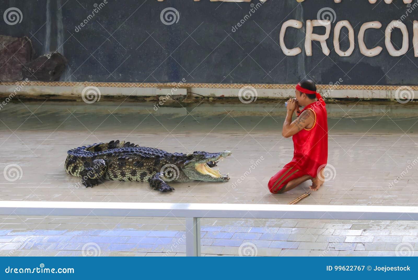 Przedstawienie duży krokodyl na podłoga w zoo
